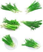 Collage (set) of young onion on white. Isolated — Stock Photo