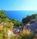 Crimea Black Sea landscape.Pine — Stock Photo