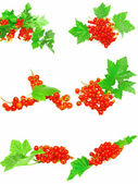 Collection of red currant with foliage. Isolated. — Stock Photo