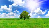 Alone one big tree on green field . Panorama — Stock Photo