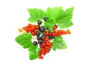 Berry mix-röd, svart vinbär, med leaf.isolated. — Stockfoto