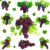 Collage of grapes with foliage. Isolated — Stock Photo