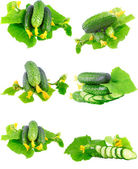 Collage of Cucumbers on white background. — Stock Photo