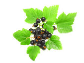Black currant with leaf on white .Isolated. — 图库照片