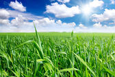 Green grass, the blue sky and white clouds — Stock Photo