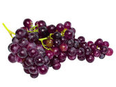 Branch of black grapes . Isolated — Stock Photo
