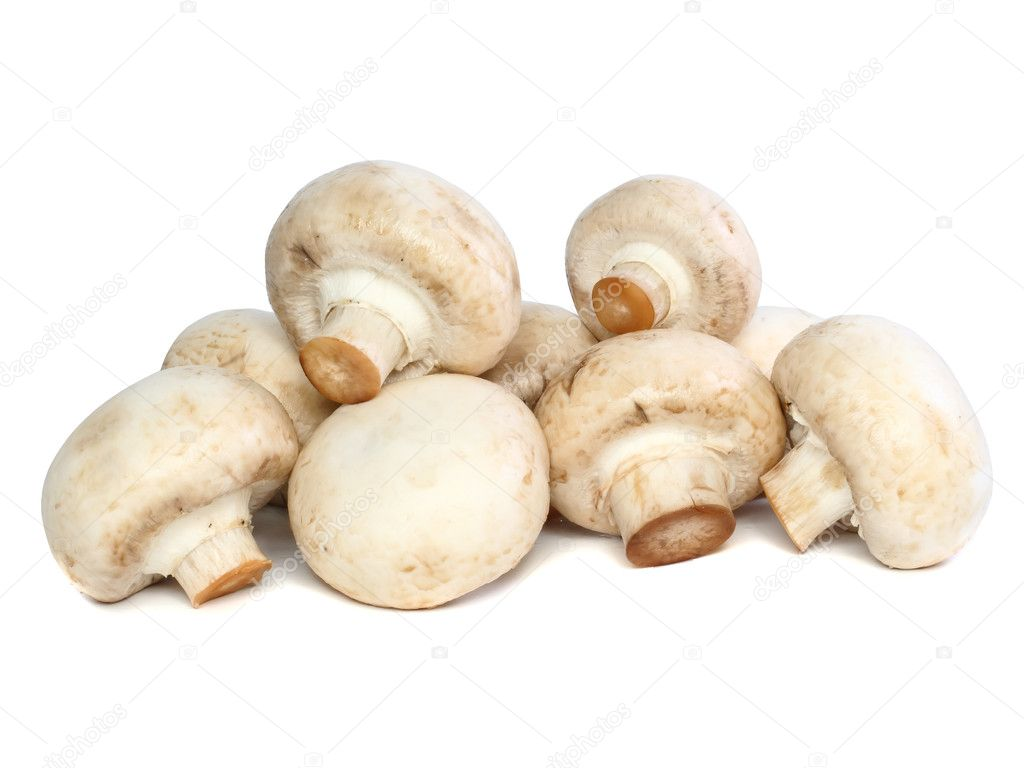 Ripe mushroom champignon , isolated on white background. — Stock Photo #6913441