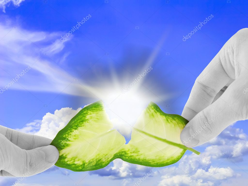 Ecology concept -asunder destroy green leaf in black-white hand. — Stock Photo #6914125