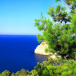 Crimea landscape. Mediterranean Pine - Stock Photo