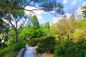 Tropical park in Crimea — Stock Photo