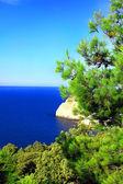 Crimea landscape. Mediterranean Pine — Stock Photo