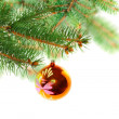 Christmas decoration-glass ball on fir branches. — Stock Photo #7603943