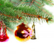 Christmas decoration-glass ball on fir branches. — ストック写真