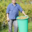 Vintner During Harvest — Stock Photo #7277014