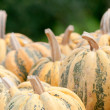 Autumn Pumpkins — Stock Photo
