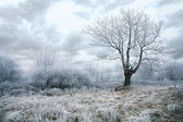 Gloomy day in winter — Stock Photo
