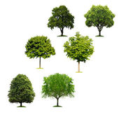 Trees on white — Stock Photo