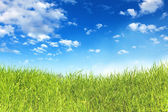 Green grass with blue sky — Stock Photo