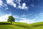 Field,tree and blue sky — Foto de Stock