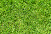 緑の草の背景 — ストック写真