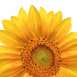 Stock Photo: Bright colorful yellow sunflower isolated over white