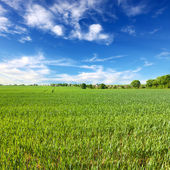 Spring landscape, english countryside — Stock Photo