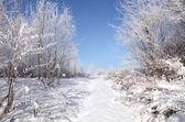 Pierwszy śnieg — Zdjęcie stockowe