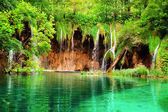 Hermosa naturaleza — Foto de Stock