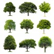 Trees Collection — Stockfoto #7393609
