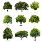 Bomen collectie — Stockfoto
