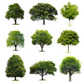 Kolekcja drzew — Zdjęcie stockowe