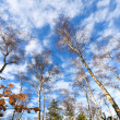 Stock Photo: Forest on blue sky