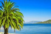 Vakantie in de tropen — Stockfoto