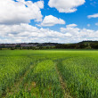 Green rural landscape — Stock Photo #7020821