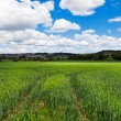 Green rural landscape — Stock Photo
