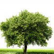 Tree on the field — Stock Photo #7027462