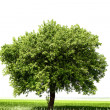 Tree on the field — Stock Photo