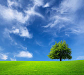 Tree and green field — Stock Photo