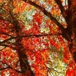 Beautiful autumn — Stock Photo