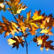 Autumn leaves against a blue sky — Stock Photo #7090817