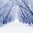 winter — Stockfoto
