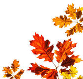 Autumn card on white background — Stock Photo