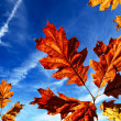 Autumn — Stockfoto #7135358