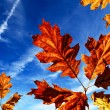 Autumn — Stock Photo #7135358