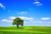 グリーン ツリーと青空 — ストック写真