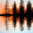 Larch trees at the lake — Stock Photo