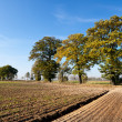 Photo: Autumn agricultural landscape