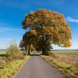 Country Autumn Road — Stock Photo