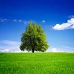 Tree on green field — Stock Photo