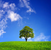 Oak tree — Stockfoto